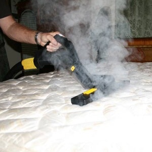steam treatment bed bugs